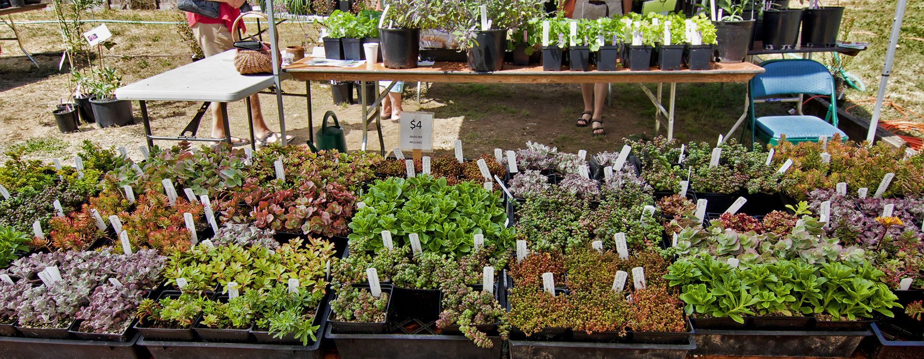 Events heronswood for Plants for sale