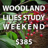 Buy 1 space for Woodland Lilies Study Weekend for $385