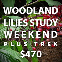 Buy 1 space for Woodland Lilies Study Weekend plus Trek for $470